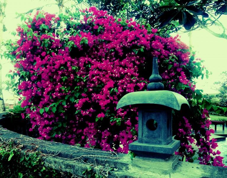 bali-flowers