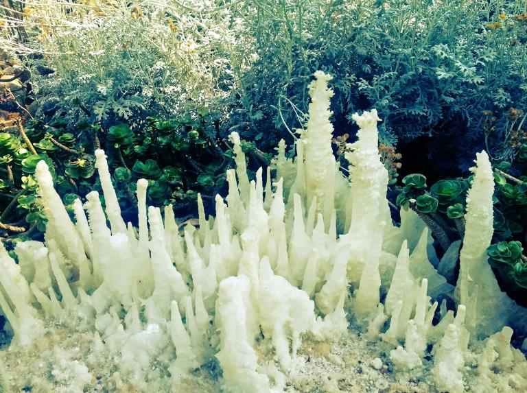 singapore-iceflowers